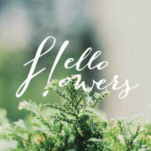 hello flowers!